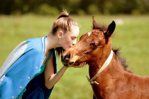 pet-horse